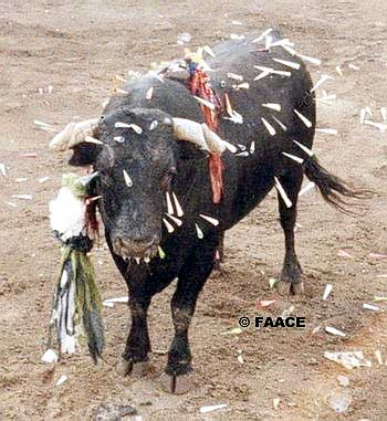foro boca toro: