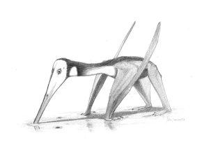Un Pterodáctilo en acción (clic para ampliar)