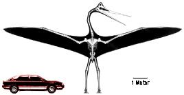 quetzalcoatlus_escala