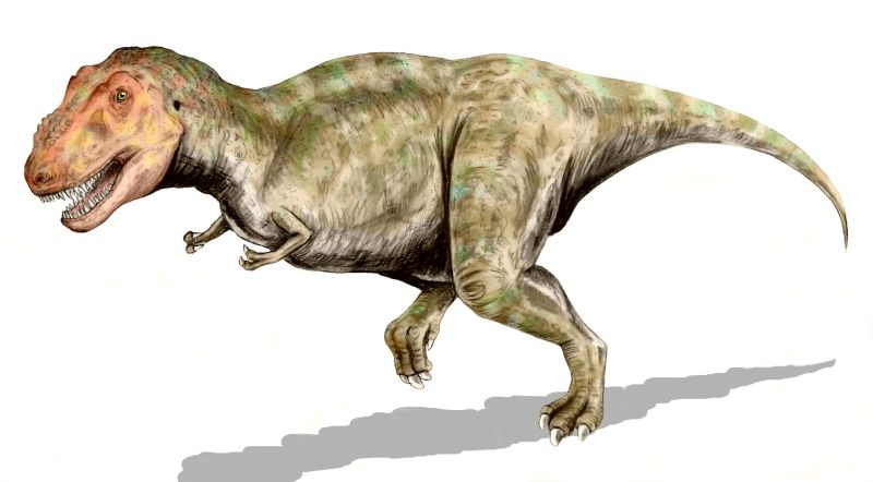 577 t rex. 577-T-Rex