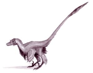 Aspecto real de un velocirraptor