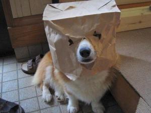 Gracias al azar, uno encuentra fotos impagables como la de este perrito.