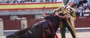 El torero Israel Sancho sufriendo una grave cogida hace muy poco (clic para ampliar)