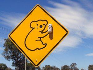 Peligro: koalas borrachos